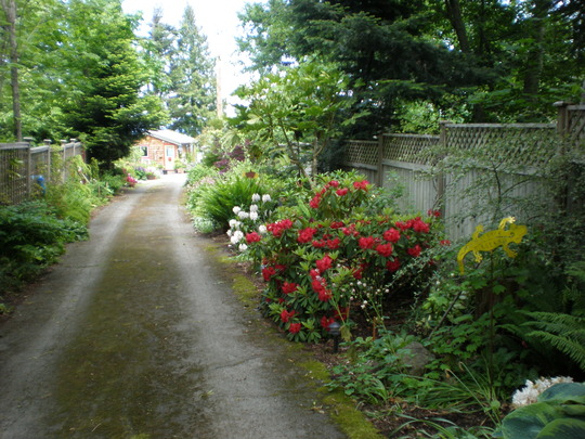 Drive way to our home