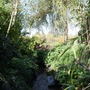 Brook beside Willow Tree