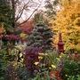 Lower_garden_25_october