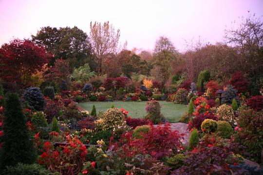 Morning blush - upper garden 25 October