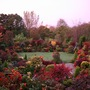 Morning_blush_upper_garden_25_october