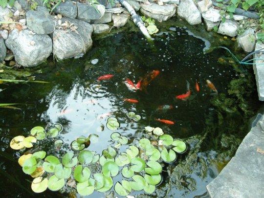 Fish_pond_1.jpg