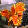 A garden flower photo