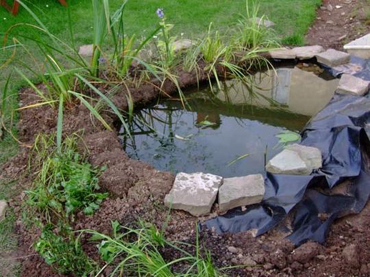 Pond and bog garden