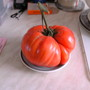 my Largest Tomato so far 1lb 15onzs sitting on a saucer