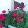 garden_flower_pics_023.jpg