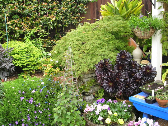 COLOURFUL PLANT COMBINATIONS