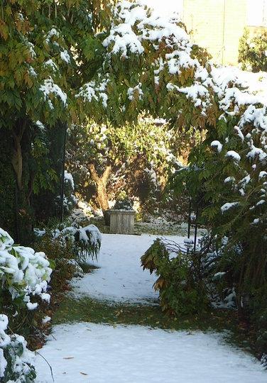Back garden - October 29th