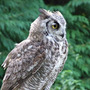 Wise_gardening_owl