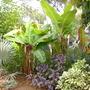 Plants_pics_114