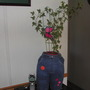 Ivy house plant in jeans planter