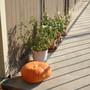 My pumpkin.