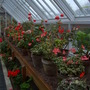 Overwintering at Heligan