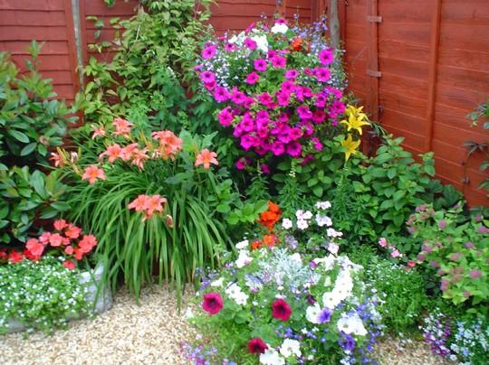 Planting Upwards In Small Gardens 2006