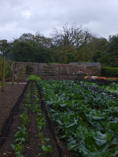 Winter vegetables at Heligan