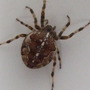 Spider in the bath