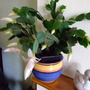Easter? Christmas? Cactus
