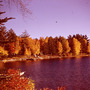 Fall_colors4