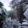 Snow_feb_08