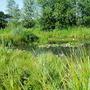 Summer Shot Of Pond (2)