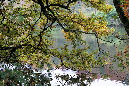 Trees and water, my favourite combination