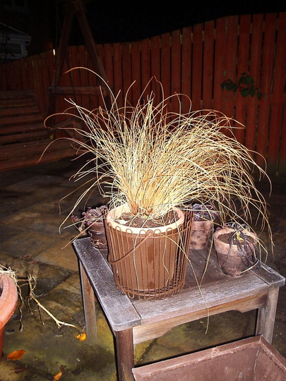 Carex Celebrating Guy Fawke's Night.