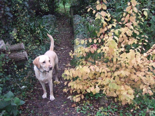 Henry and a yellow bush.