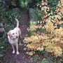 Henry_and_autumn_colour
