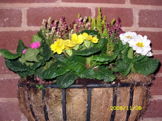 Winter Basket (Polyanthus, Heather, Daffodils)