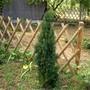 IMGP4205.jpg (Taxus baccata (Yew))
