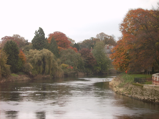 River Wye in Hereford - Autumn Scene (Fagus sylvatica (Common Beech))