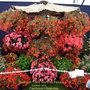 Trade stand at Southport show with basket begonias