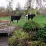 Cows_034