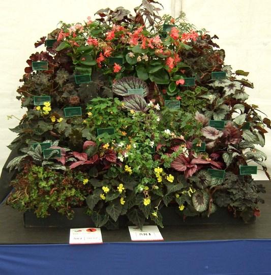 Sam Kennedy's winning display at Ayre 08