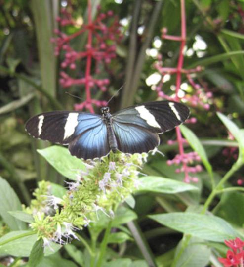 From Butterfly Garden