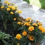 Garden_pictures_oct_18th_08_080