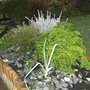 Herb bed.