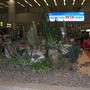 Cactus_display_Seoul_airport.jpg