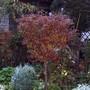 Nov_5th_dead_garden_015