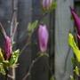 Garden_april_2008_065