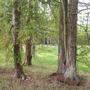 small Cedar grove