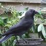 2008_1117birds170047