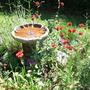Garden_may07_027