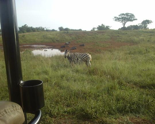 On Safari 2