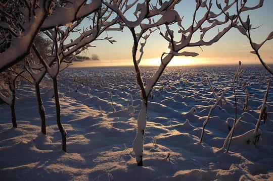 Michigan Field in Winter