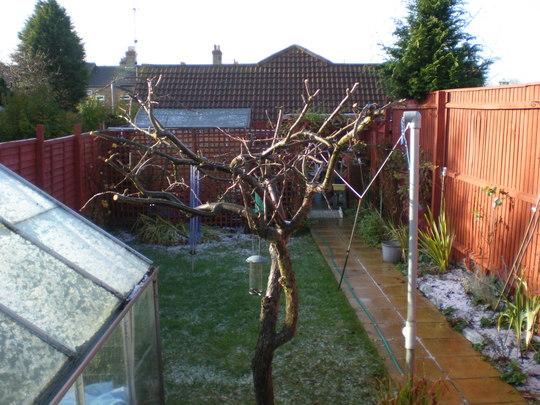 CUTTING APPLE TREE