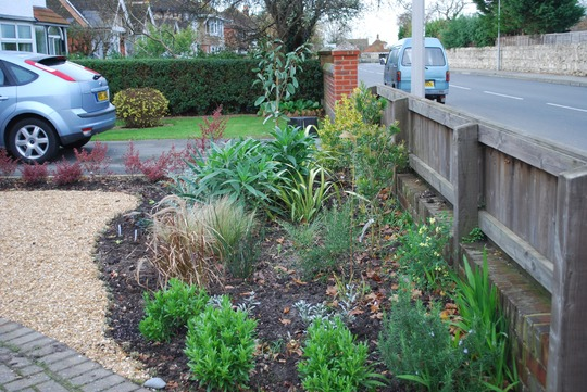Front Garden Project Grows On You