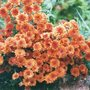 Scan0025_025