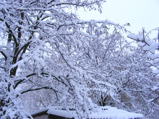 Trees look wonderful in our winter wonderland