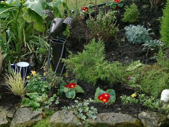 Thin Tin Tin and polyanthus